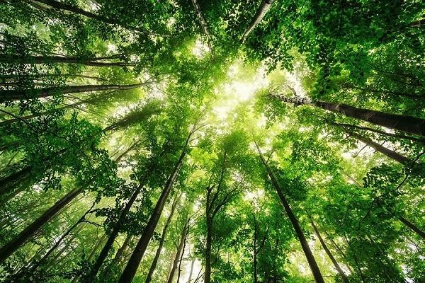 تور جنگل راش سوادکوه | قیمت تور جنگل راش 98