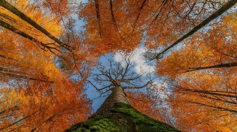 جنگل-راش-سوادکوه