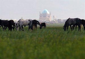چمن-طبیعی-سلطانیه-استان-زنجان