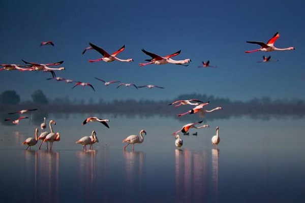 خلیج-گرگان-و-تالاب-میانکاله