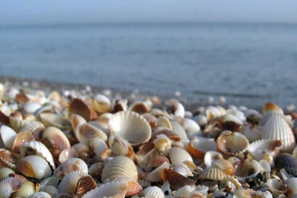 ساحل زیبای صدف (داداش آباد سیبلی)
